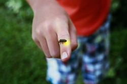 Firefly on a child's finger