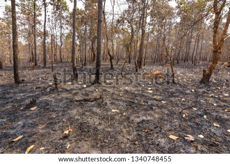 Fires, deciduous forests, mixed deciduous forests during the dry season of Southeast Asia  #1340748455