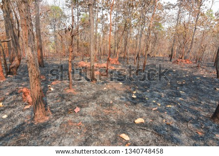 Fires, deciduous forests, mixed deciduous forests during the dry season of Southeast Asia  #1340748458