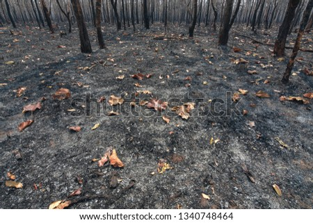 Fires, deciduous forests, mixed deciduous forests during the dry season of Southeast Asia  #1340748464