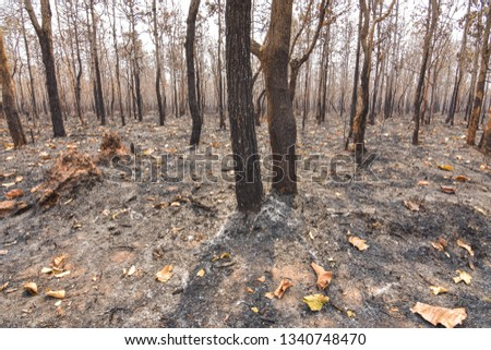 Fires, deciduous forests, mixed deciduous forests during the dry season of Southeast Asia  #1340748470