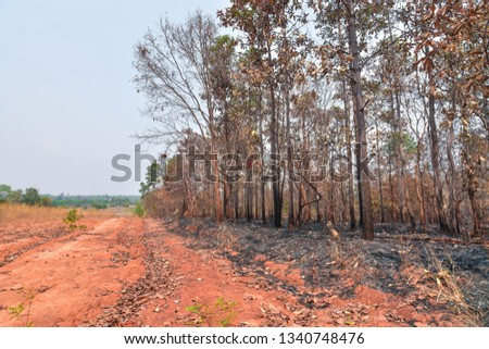 Fires, deciduous forests, mixed deciduous forests during the dry season of Southeast Asia  #1340748476