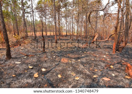 Fires, deciduous forests, mixed deciduous forests during the dry season of Southeast Asia  #1340748479