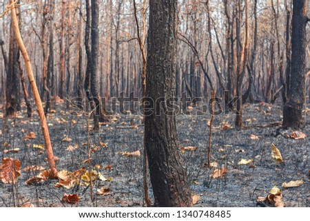 Fires, deciduous forests, mixed deciduous forests during the dry season of Southeast Asia  #1340748485