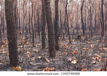 Fires, deciduous forests, mixed deciduous forests during the dry season of Southeast Asia  #1340748488