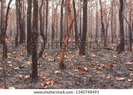 Fires, deciduous forests, mixed deciduous forests during the dry season of Southeast Asia  #1340748491