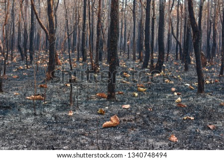 Fires, deciduous forests, mixed deciduous forests during the dry season of Southeast Asia  #1340748494