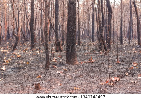 Fires, deciduous forests, mixed deciduous forests during the dry season of Southeast Asia  #1340748497