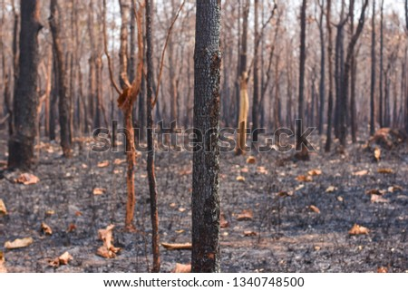 Fires, deciduous forests, mixed deciduous forests during the dry season of Southeast Asia  #1340748500