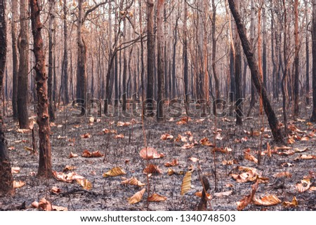 Fires, deciduous forests, mixed deciduous forests during the dry season of Southeast Asia  #1340748503