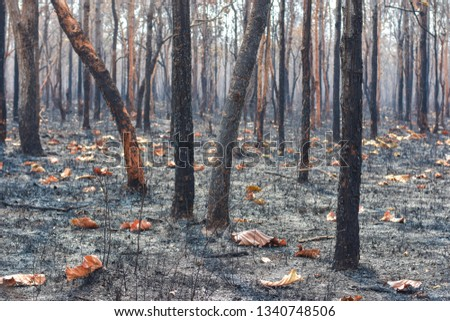 Fires, deciduous forests, mixed deciduous forests during the dry season of Southeast Asia  #1340748506