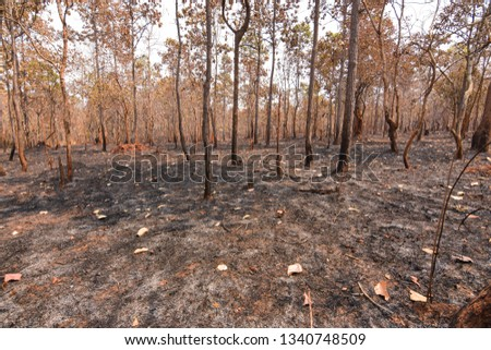 Fires, deciduous forests, mixed deciduous forests during the dry season of Southeast Asia  #1340748509