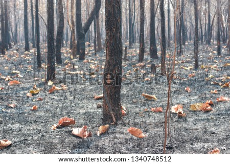 Fires, deciduous forests, mixed deciduous forests during the dry season of Southeast Asia  #1340748512