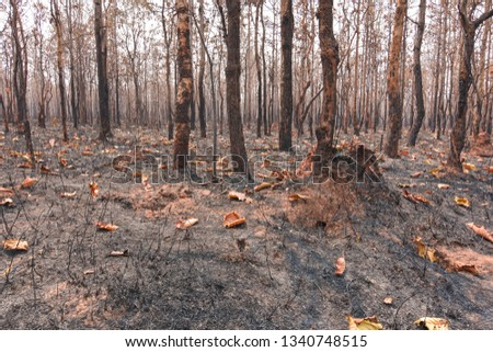 Fires, deciduous forests, mixed deciduous forests during the dry season of Southeast Asia  #1340748515