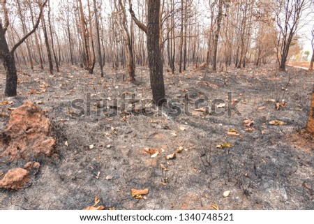 Fires, deciduous forests, mixed deciduous forests during the dry season of Southeast Asia  #1340748521