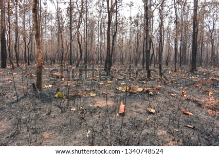 Fires, deciduous forests, mixed deciduous forests during the dry season of Southeast Asia  #1340748524