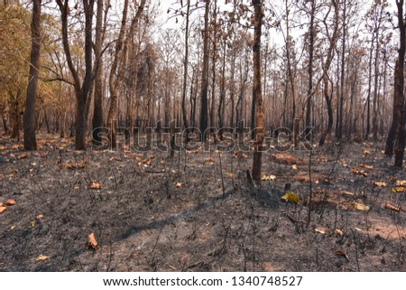 Fires, deciduous forests, mixed deciduous forests during the dry season of Southeast Asia  #1340748527