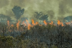 Fires in the Amazon forest - global climate change. Burning rainforest.