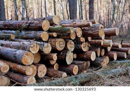 firewood store in forest in spring day