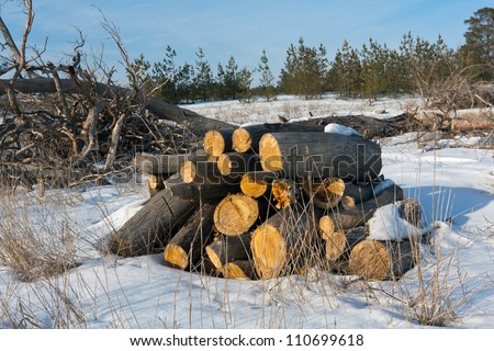 firewood store in forest in winter time