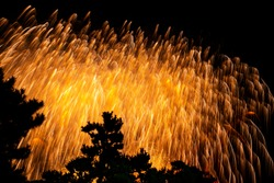 Fireworks falling beyond a grove in the night sky.