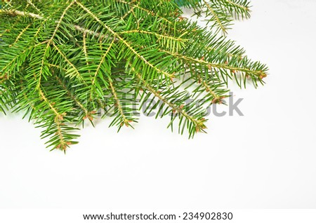 firs branches in white xmas background - space to put your text #234902830