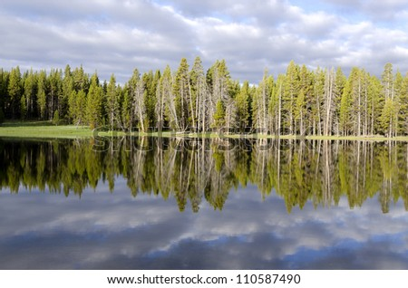 firs reflections on Yellowstone Lake  in Wyoming in the United States of America