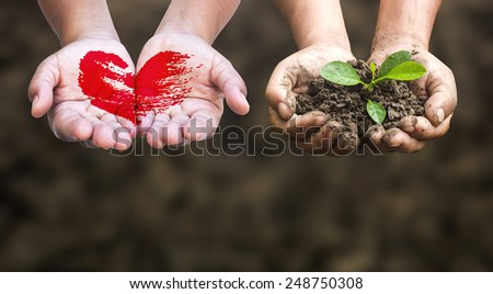 First, painted red heart on hands. Second, hands holding a young plant. Ecology, World Environment Day concept.