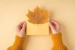 First person top view photo of female hands in yellow sweater holding open pastel yellow envelope with autumn maple leaf on isolated light orange background with copyspace
