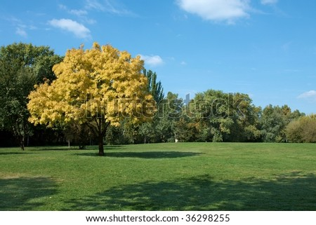 First sign of autumn: one tree in yellow - stock photo