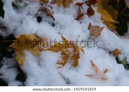 First snow before winter covering all the fall leaves on the ground. #1459541819