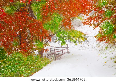 First snow in autumn beech forest in the Carpathian Mountains. - Shutterstock ID 361844903