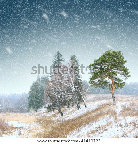 First snow in forest