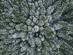 First snow in spruce tree forest. Moscow region. Russian landscape. Aerial view