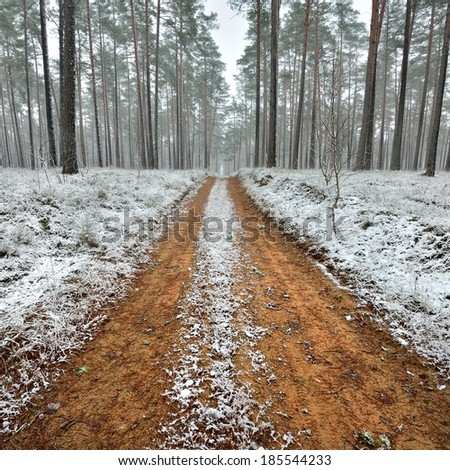 First snow in the forest and a sand road