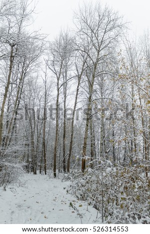 First snow in the forest, November #526314553