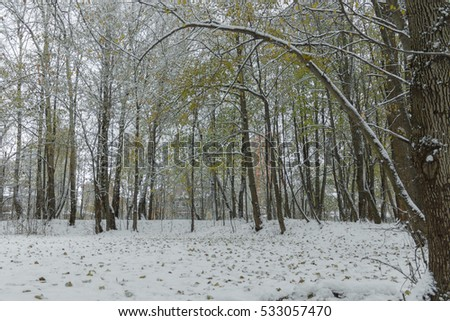 First snow in the forest, November #533057470