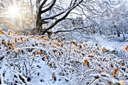 First snow in the park. Winter landscape.