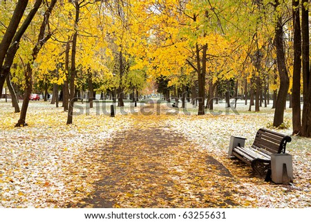 First snow in yellow park