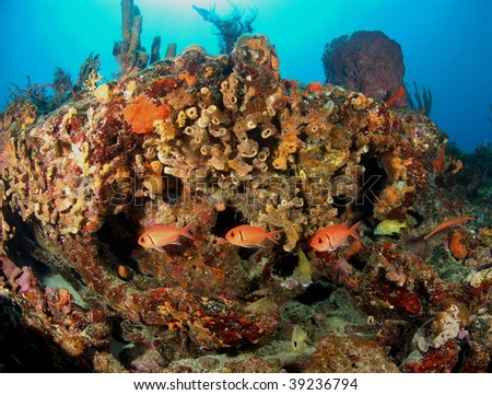 fish and reef