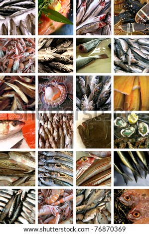 Fish and seafood collage