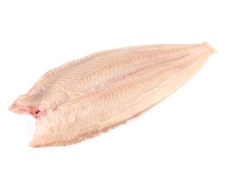 Fish and Seafood - Sole without Skin - Flatfish on Withe