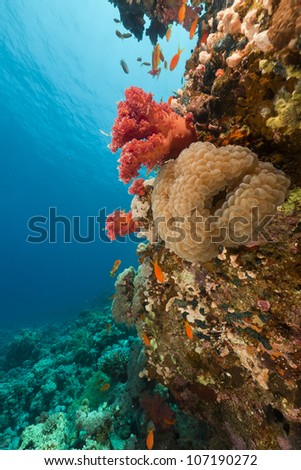 Fish and tropical reef in the Red Sea.