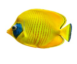 Fish Aquarium Tropical Yellow isolated on white. dicut save in jpg file Clipping paths.