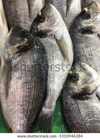 fish arthropod sea #1310946284
