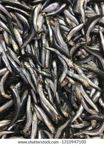 fish arthropod sea #1310947100