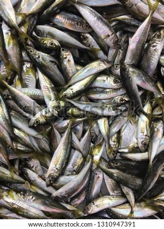 fish arthropod sea #1310947391