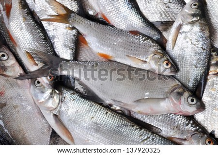 Fish background. Many Silver fishes.