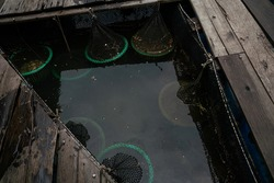Fish cages sea bay built with blue plastic barrels animal industry