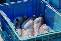 Fish caught by fishermen from Roses in Spain